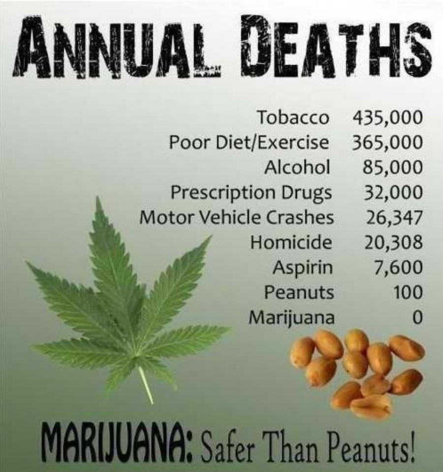 Image result for more people die from aspirin than marijuana