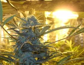 HID (High Intensity Discharge) Grow Lights