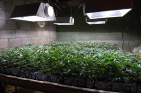 Cannabis Carbon Footprint: Marijuana Industry's Environmental Impact
