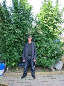 choosing a plant shape for your marijuana weedist