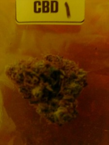 The First Annual 'The Hemp Connoisseur': Part 4: Strain Reviews 3; Source Prospero