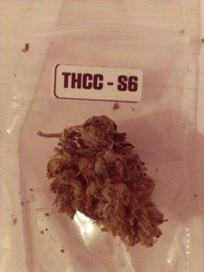 The First Annual 'The Hemp Connoisseur': Part 4: Strain Reviews 3; Source: Prospero