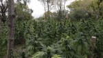 $10 Million Marijuana Farm Found in Chicago