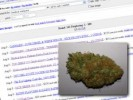 Craigslist Marijuana Trade Blurs Legality of Oregon Medical Marijuana