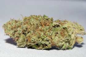 SMC medical marijuana - Sensi Star web, Source: , Source: https://www.facebook.com/SeriousMedicineCollective