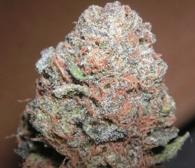 Old Hippie Strain Story: Purple Kush
