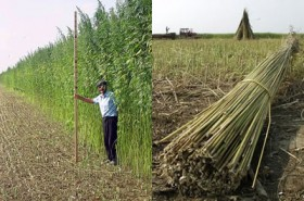 Hemp Legalization Effort Gathers Steam
