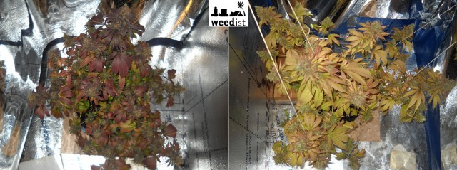 LED grow light comparison grow test