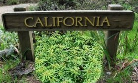 Oakland Complains of 'Twilight Zone' Medical Marijuana Case