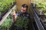Medical Pot a Huge Part of Silicon Valley