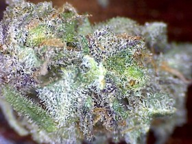 Strain Reviews: Indica and Indica Dominant Cannabis for Sleep Aid and Pain Relief