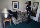 WA Police Dogs No Longer Trained to Find Marijuana