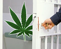 Poll: Almost No One Thinks Marijuana Users Should Be Jailed