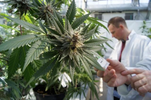 debates on marijuana