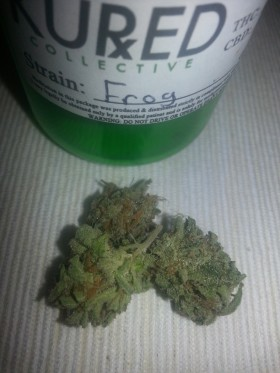 My Favorite Strains: Frog