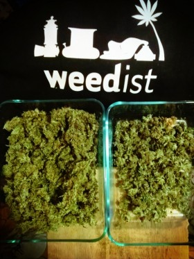 curing cannabis, home grow, Source: Prospero Weedist