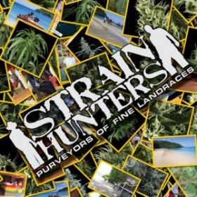 Marijuana Adventure: Swashbuckling for Sativa Strains