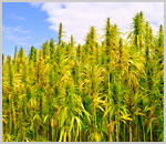 California: Governor Signs Industrial Hemp Farming Act