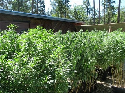 Why more women should grow marijuana weedist for Easy to grow outdoor plants