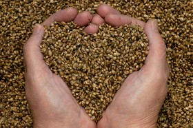 Hemp Seeds, Great Ways to Add This Healthy Food to Your Diet