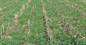 The Leaf: Covered? Winter Cover Crops for Big Fall Harvests