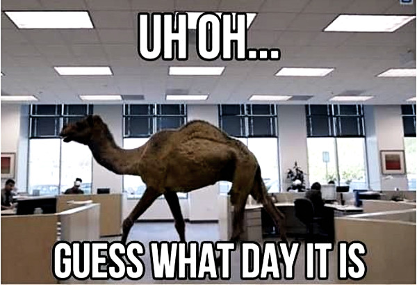 Geico Happy Hump Day Images On hump day� commercial,