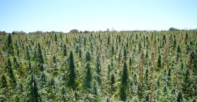 Hemp Amendment Becomes Law as Prez Signs Farm Bill