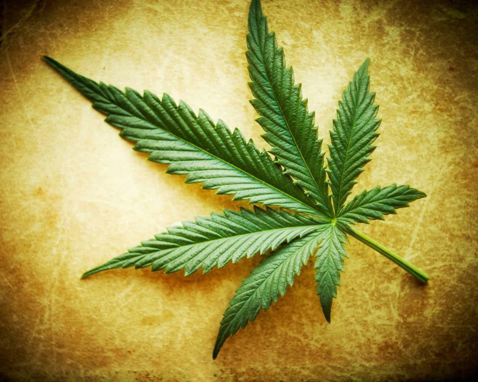 the link between cancer and marijuana should marijuana be legalized
