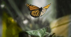 Weedist Destinations: The Butterfly House