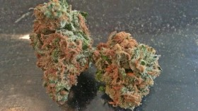 My Favorite Strains: Glass Slipper