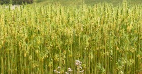 South Carolina Hemp Bill Moves Forward, MMJ Bill Introduced