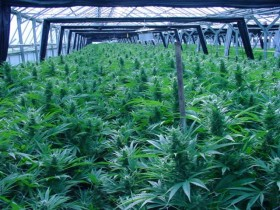 Feds to Deny Water to Washington Marijuana Growers?