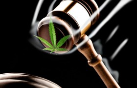 Five Medical Marijuana Patients From Washington State Proceed to Trial in Federal Court