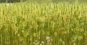 South Carolina: Lawmakers Sign Off on Hemp Cultivation Measure