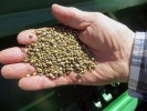 350 Pounds of Hemp Seeds Seized at US-Canada Border