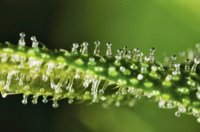 Cannabinoid Profiles: Meet Your CB Receptors