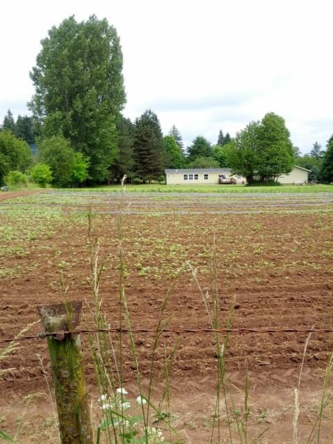 My Visit to A Legal Cannabis Farm - Weedist