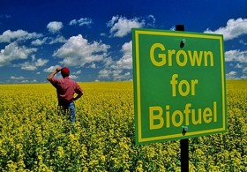 Hemp Biofuels to Save the World