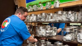 Poll: Six Out Of Ten Americans Support Retail Marijuana Sales In Colorado
