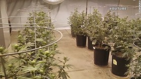 Las Vegas Police Bust Pot Grower Who Put His Crop on YouTube