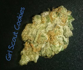 My Favorite Strains: Girl Scout Cookies