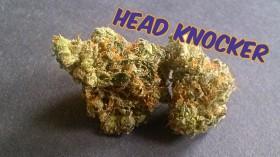 My Favorite Strains: Head Knocker