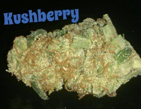 My Favorite Strains: Kushberry
