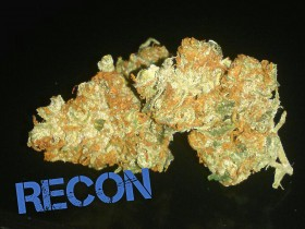 My Favorite Strains: Recon