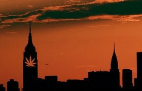 NYPD Begins Enforcing Less Severe Cannabis Policy