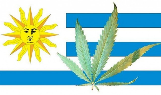 Uruguay Presidential Candidates Opposite on Mujica's Legal Weed Law