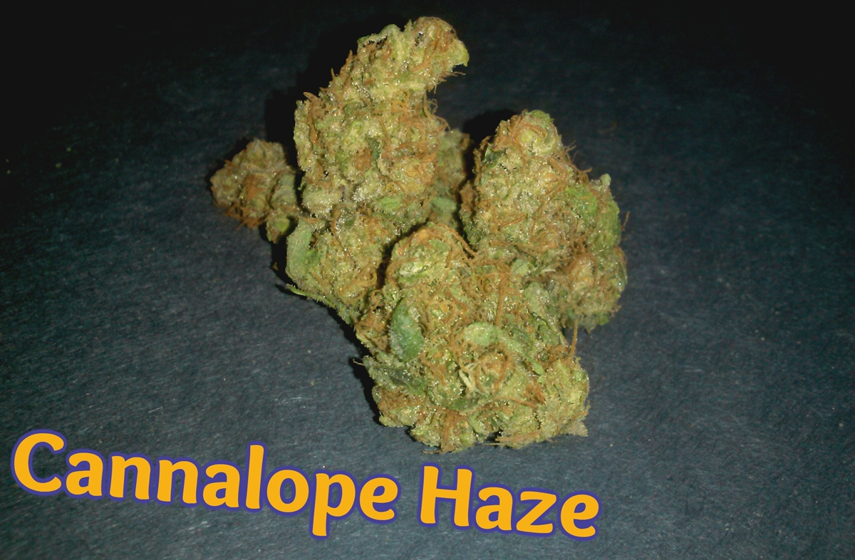 My Favorite Strains Cannalope Haze Weedist Almost a pure sativa that crosses haze brothers original haze and a mexican landrace, this strain is a great solution for fatigue and when struggling with appetite loss. weedist