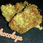 My Favorite Strains: Chocolope - Weedist