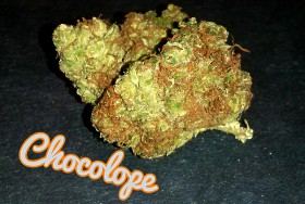 My Favorite Strains: Chocolope