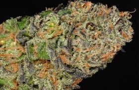 Strain Review: Sour Diesel